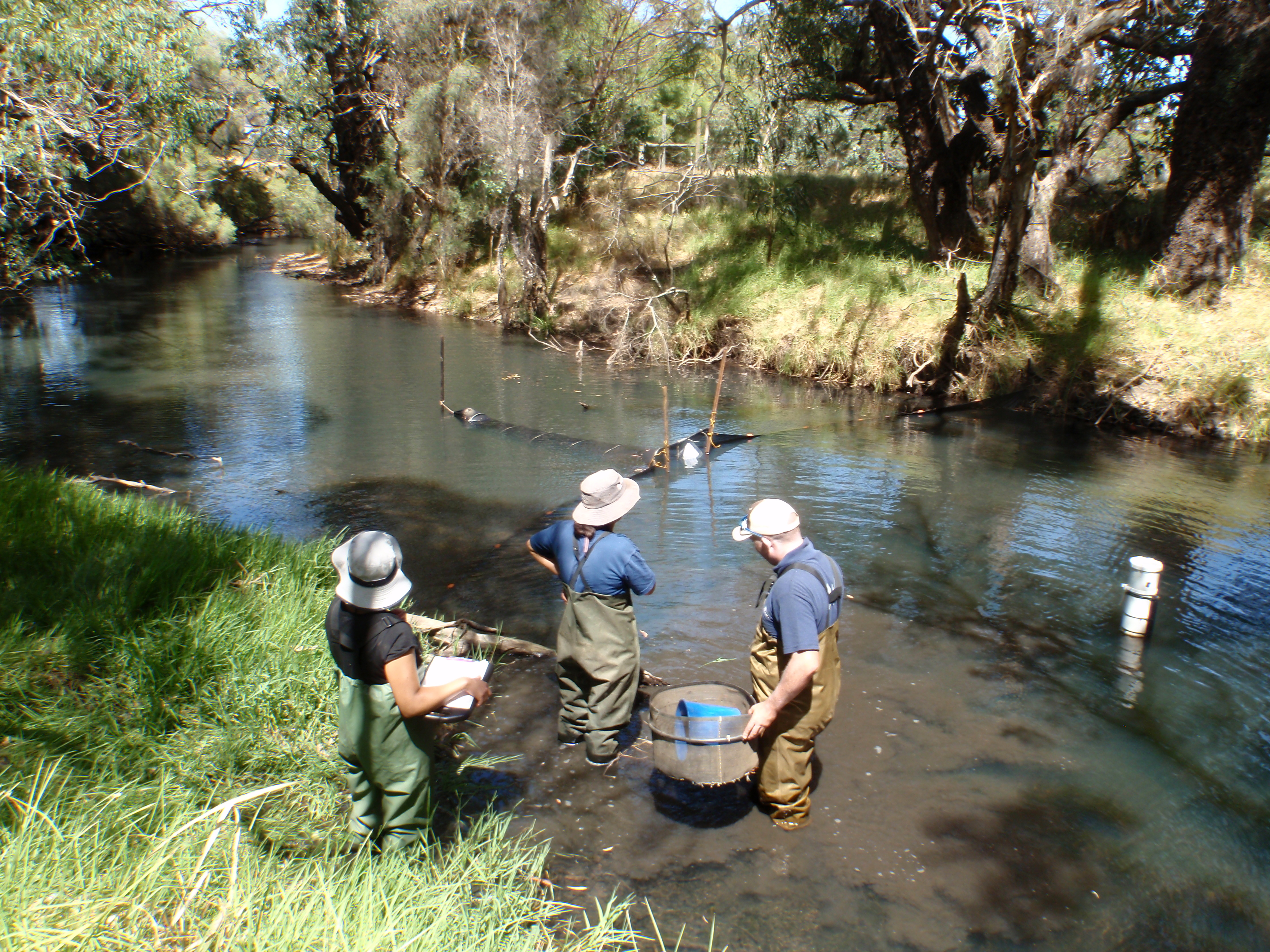 assessing river health Serpentine