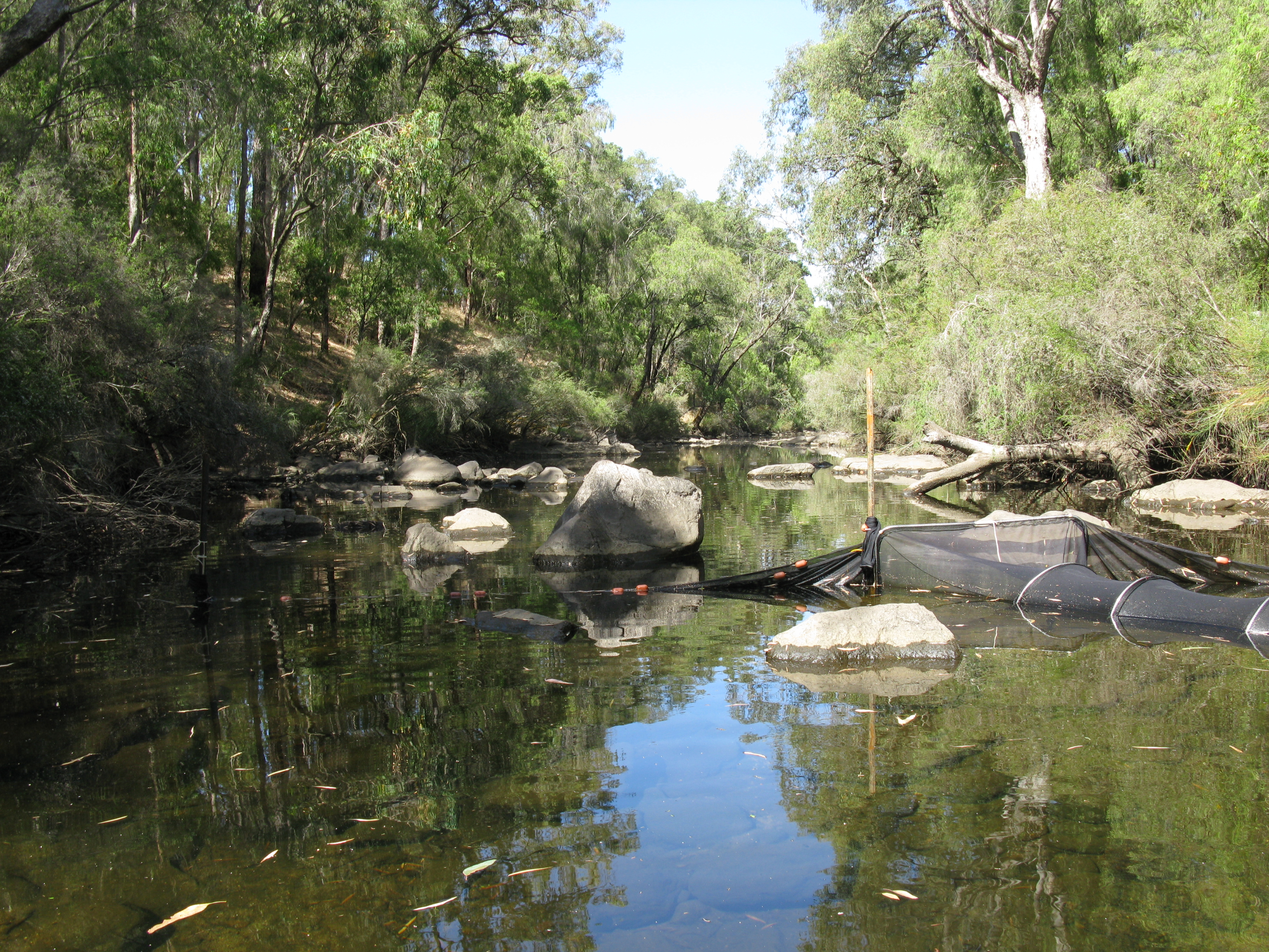 collie river with fyke net