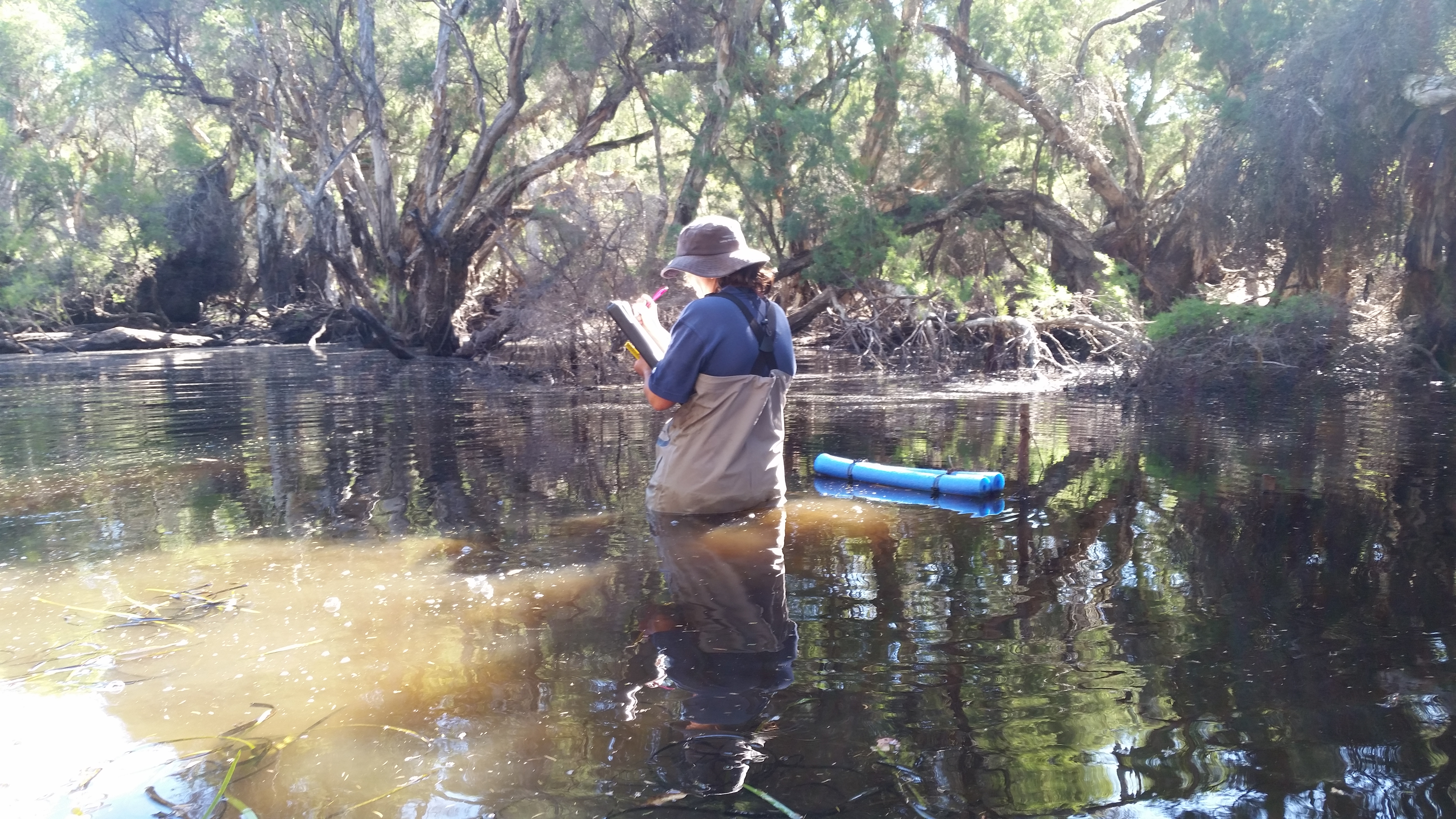 Sampling the Collie River