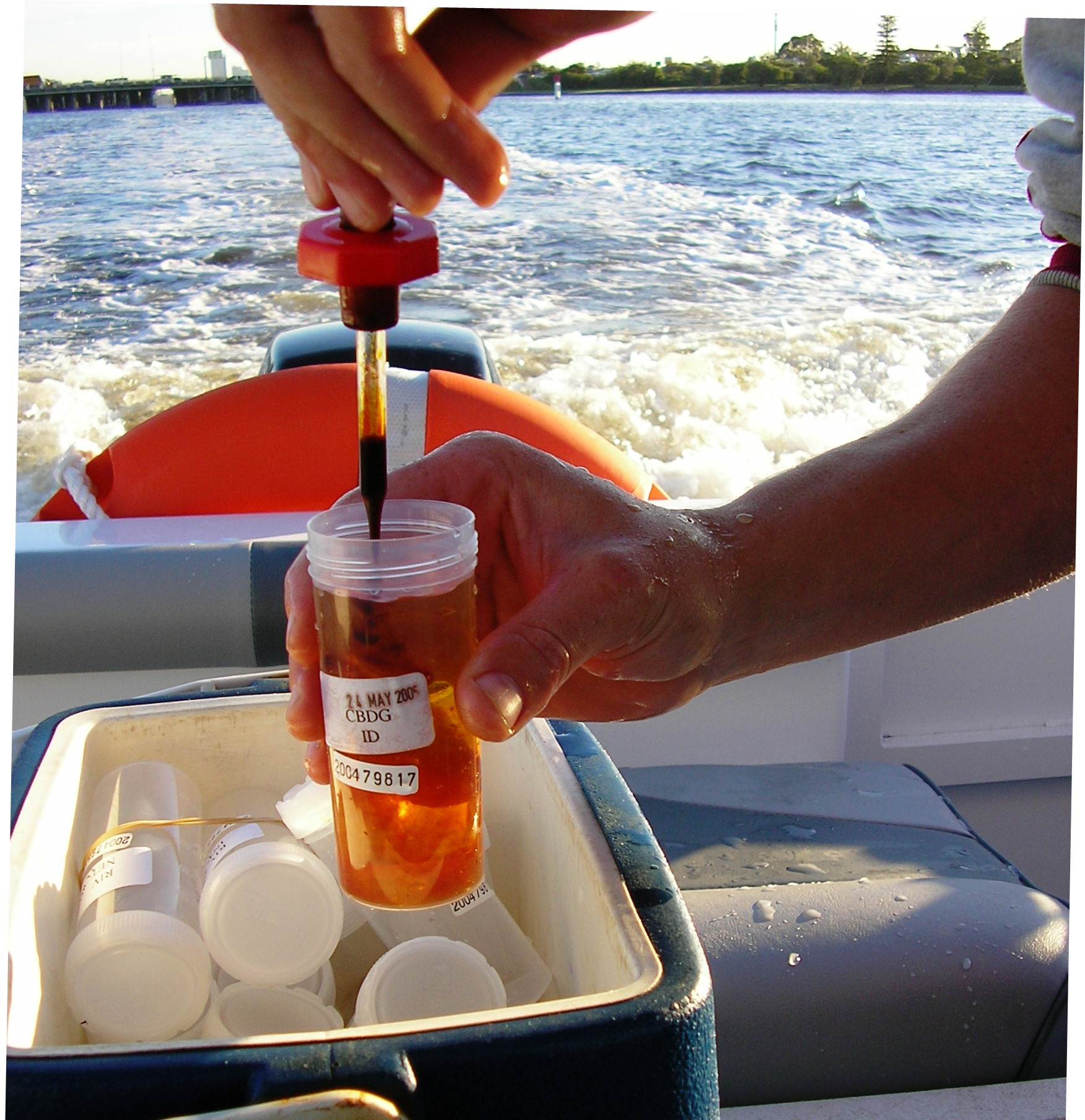 Phytoplankton sample collection in the Swan Estuary