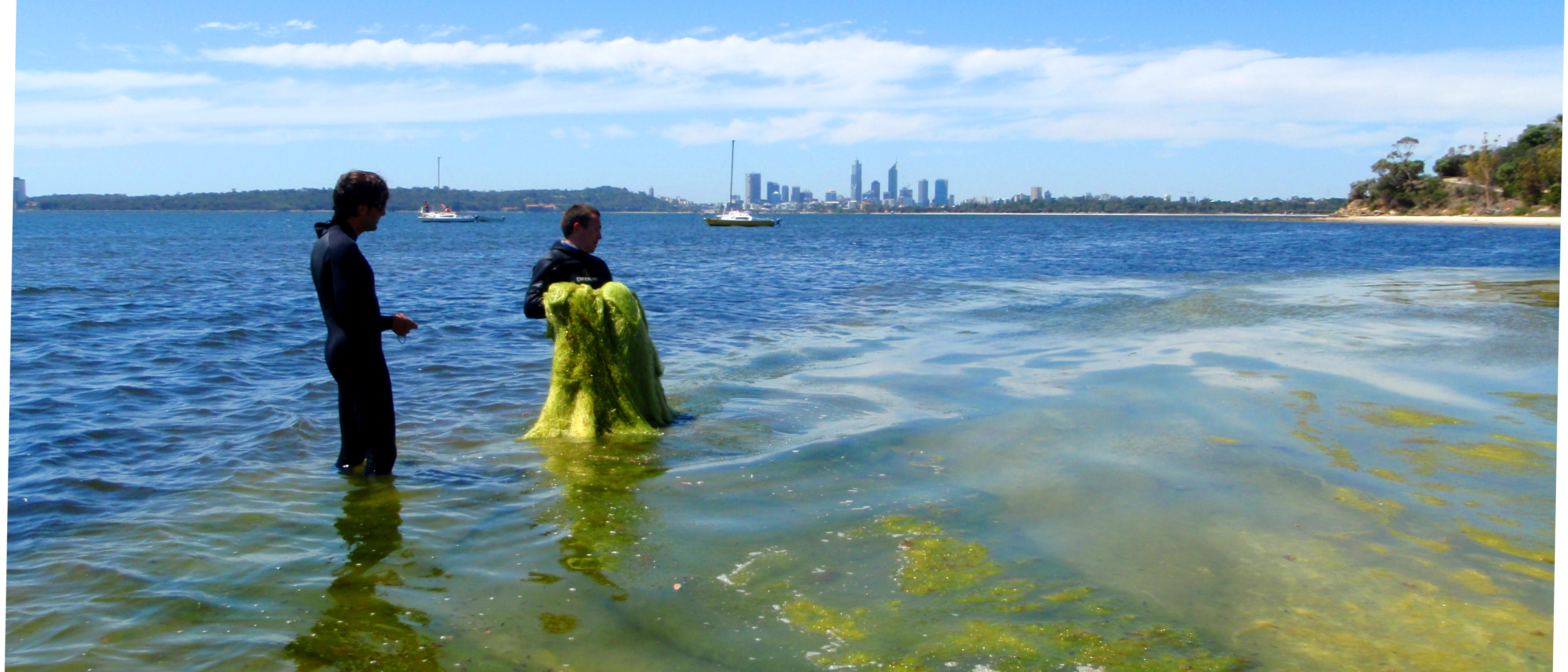 Macoalgae in Waylen Bay, Swan River 2010